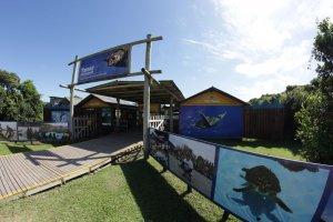 Projeto TAMAR em Florianópolis-Thiago de Andrade