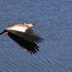 Observação de pássaros nas Serras Catarinense e Gaúcha