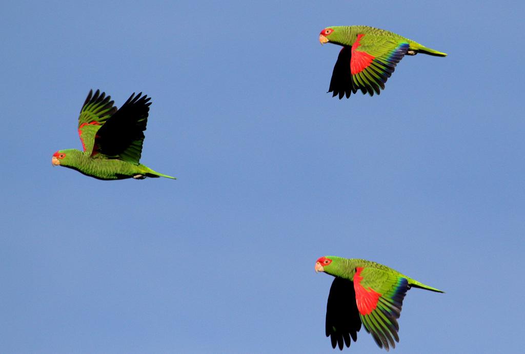 Observação de pássaros nas Serra Catarinense e Gaúcha