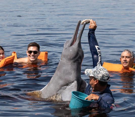 Nadando com o boto-cor-de-rosa - Fotos: Márcio Masulino