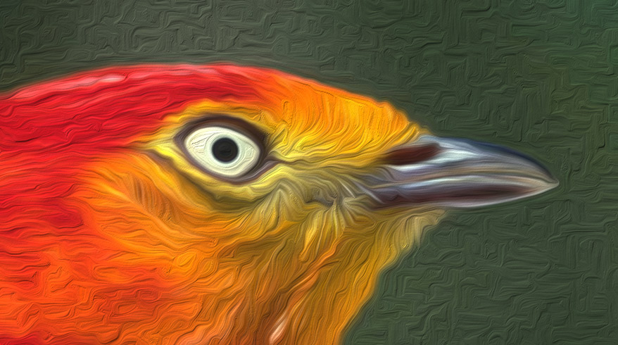 lendas da Amazônia