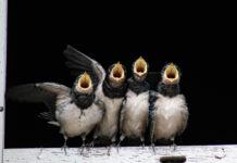 observação de pássaros em Lisboa